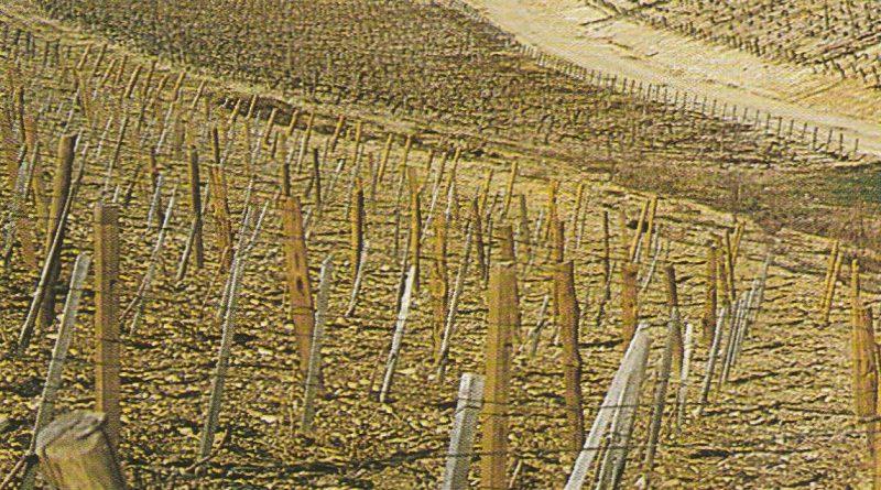 "L'arte del vino: I segreti del ""Terrior"""