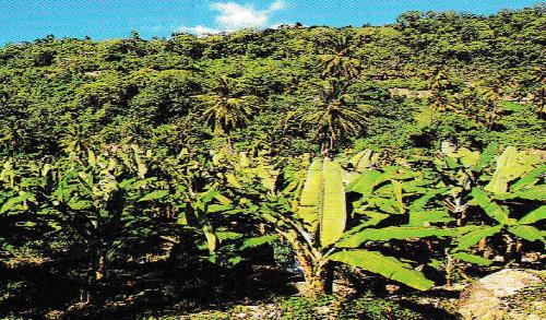 Aromi e sapori: Banana