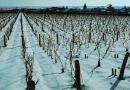 L'arte del vino: Il ruolo del clima