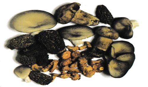 Aromi e sapori: Fungo