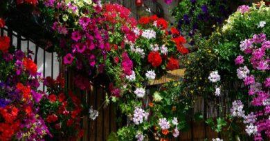 Aromi e sapori: Geranio